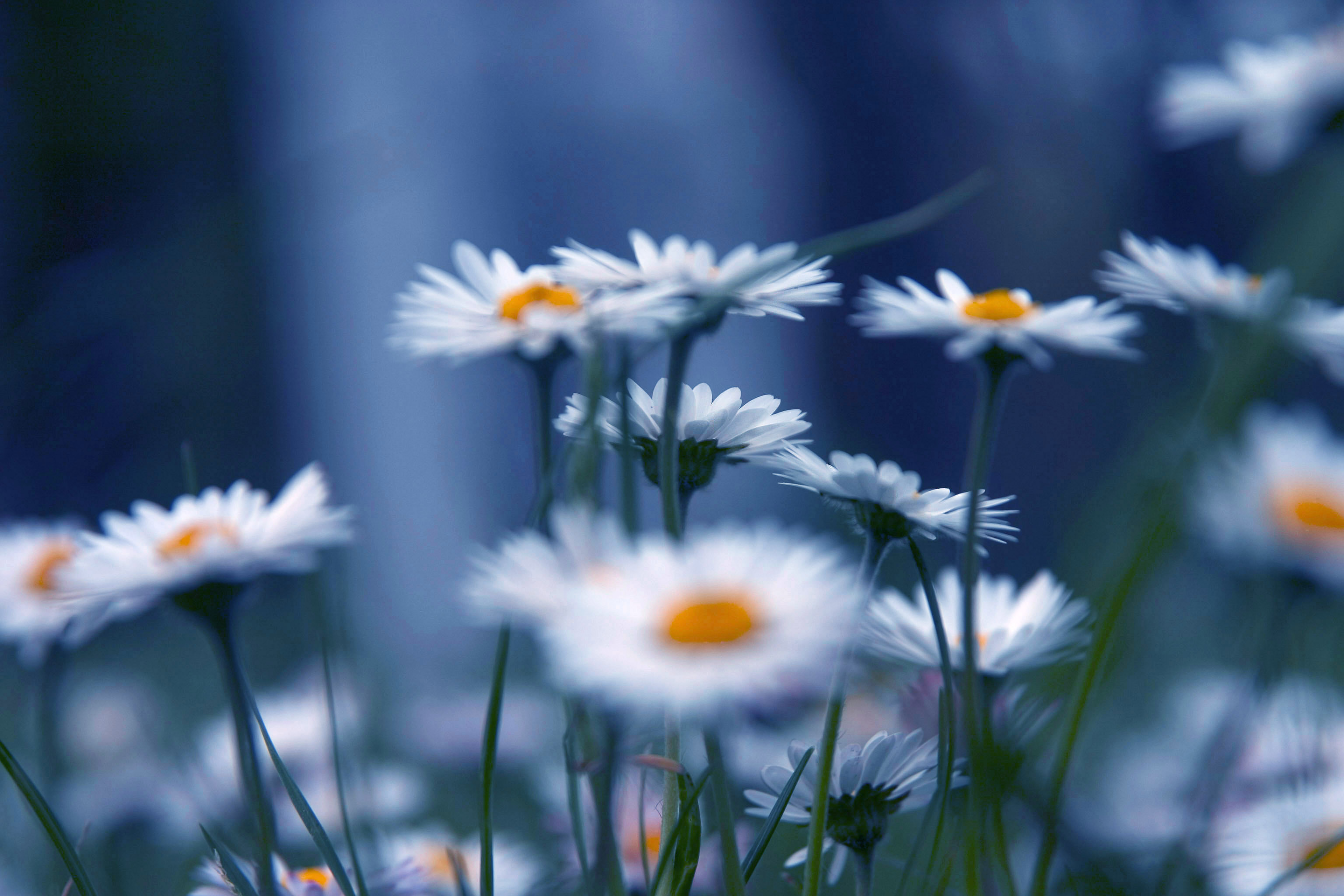Actitudes mindfulness
